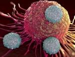 La mémoire immunitaire des cellules T prometteuse contre le COVID-19